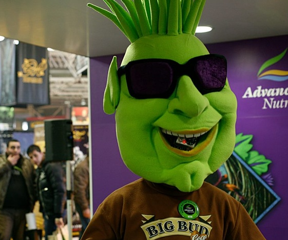 A man with marijuana bud suit
