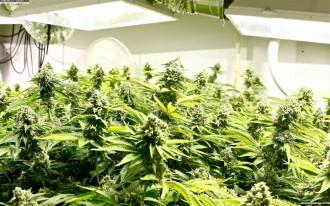 Indoor marijuana gardening