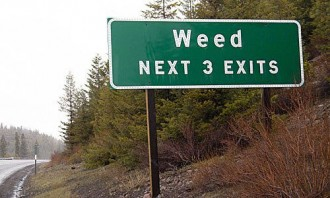 "Green road sign nexto a forest saying ""weed next 3 exits"""