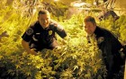 Two police officers in closed room with marijuana