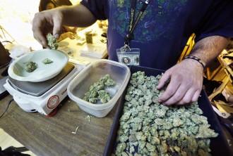 A man scaling marijuana buds