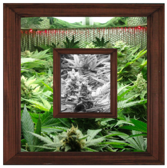 A frame in a frame showing a picture of garden