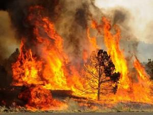 fire2-w650